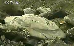 震惊视频 中国煤矿挖出UFO化石