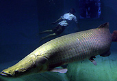 盘点世界各地的巨型鱼