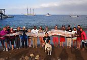 美潜水员捕获6米长带