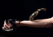 男子注百种蛇毒获免疫