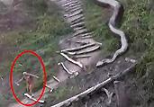 五十余米巨蛇横卧吓坏
