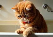 忧郁的小猫萌照走红网